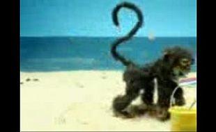 Animação do macaquinho tarado na praia